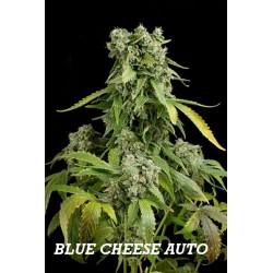 BLUE CHEESE AUTO (1) 100% DINAFEM